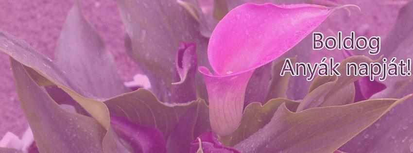 Facebook Borítóképek/Egyéb: Anyák napi Facebook borítókép Boldog Anyák napját felirattal - karácsonyi - borítóképek - ingyen - letöltése - facebook - háttérképek - idézettel - számítógépre