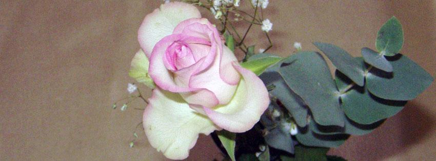 Facebook Borítóképek/Virágok: Rózsás borítókép Facebookra - idézettel - ingyen - karácsonyi - borítóképek - számítógépre - facebook - letöltése - háttérképek