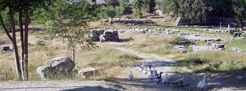 Facebook Borítóképek/Állatok/Háziállatok: Nyári Epheszosz-i (Efézus) borítókép Facebookra lúdakkal az Artemisz templom maradványainál - idézettel - borítóképek - letöltése - háttérképek - karácsonyi - facebook - számítógépre - ingyen