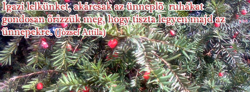 Facebook Borítóképek/Egyéb: Karácsonyi borítókép Facebook idővonalra