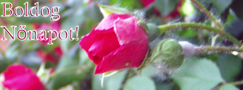 Facebook Borítóképek/Ünnepek/Nőnap: Nőnapi rózsás borítókép Facebookra Boldog Nőnapot felirattal - letöltése - ingyen - karácsonyi - háttérképek - számítógépre - idézettel - facebook - borítóképek