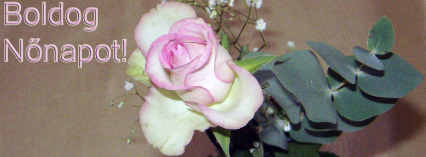 Facebook Borítóképek/Természet/Virágos: Facebookra való nőnapi rózsás borítókép Boldog Nőnapot felirattal - számítógépre - facebook - borítóképek - háttérképek - ingyen - letöltése - idézettel - karácsonyi