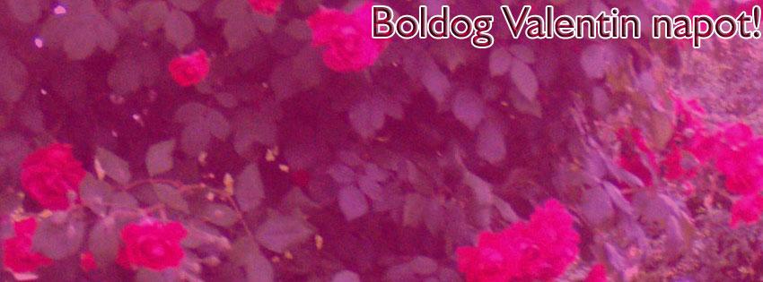 Facebook Borítóképek/Ünnepek/Valentin nap: Valentin napi virágos (rózsás) Facebook borítókép Boldog Valentin napot felirattal - idézettel - karácsonyi - borítóképek - ingyen - facebook - letöltése - számítógépre - háttérképek
