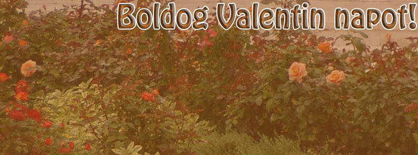 Facebook Borítóképek/Ünnepek/Valentin nap: Facebookra való Valentin napi virágos (rózsás) borítókép Boldog Valentin napot szöveggel - idézettel - karácsonyi - számítógépre - háttérképek - borítóképek - facebook - ingyen - letöltése